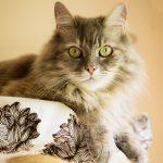 Dora on Cat Perch Cover