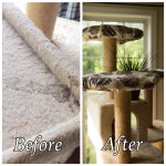 Cat Tree: Why Your Cat Needs It & How to Keep It Clean