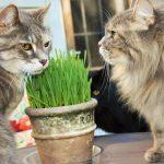 Pet Hacks:  Grow Your Own Cat Grass