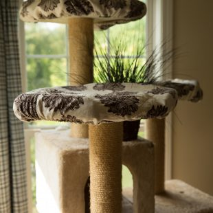 3 basic cat perch covers
