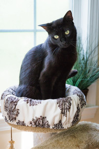 Black cat sitting on a perch cover