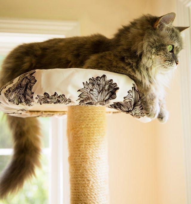 Dora on top of the cat tree