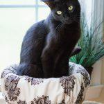 cat perch cover basic